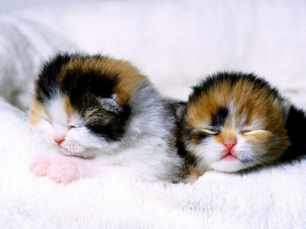 baby_cats